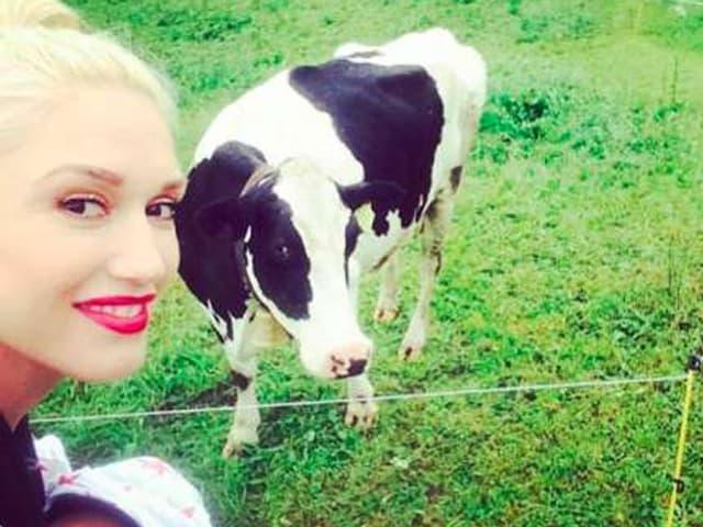 Gwen Stefani mit Kleinkind auf dem Arm und einer Schweizer Kuh im Hintergrund