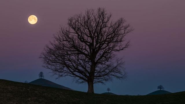 Vollmond und Bäume.