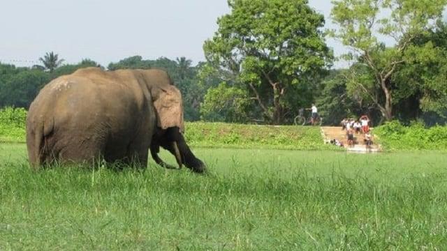 Kraftpaket:Wo Menschen und Elefanten im selben Gebiet leben, sind Konflikte programmiert.