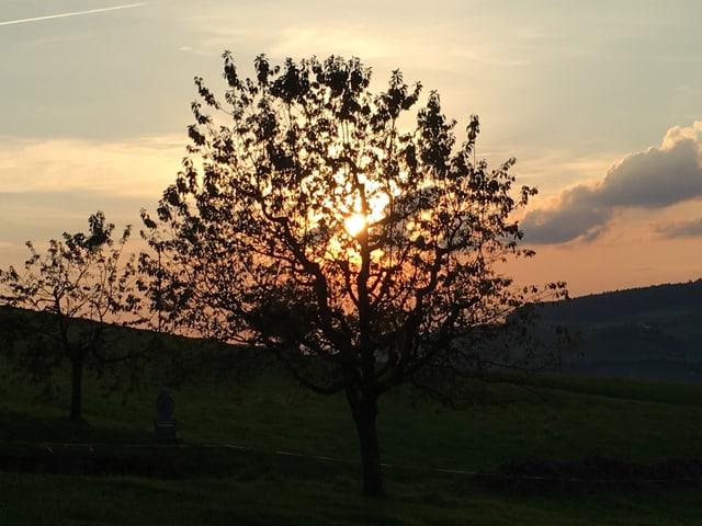 Untergehende Sonne hinter einem Baum.