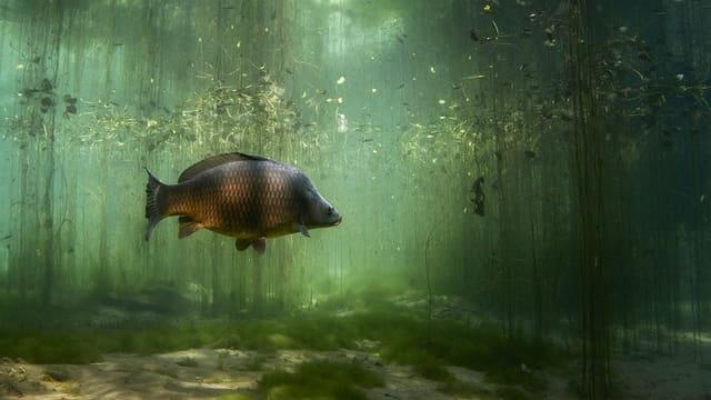 Die Unterwasserbilder von Michel Roggo entführen in eine unbekannte Märchenwelt unter der Oberfläche.