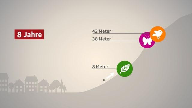 Grafik mit einer Darstellung, wie weit sich die Lebensräume von Pflanzen, Schmetterlingen und Vögeln nach oben verschoben haben.