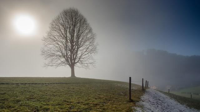 Landschaft im Appenzellerland: Die Sonne scheint diffus durch den Nebel.