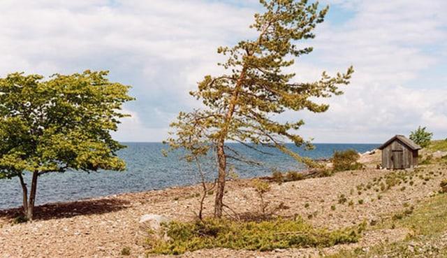 Öland: Meer im Hintergrund, Bäume