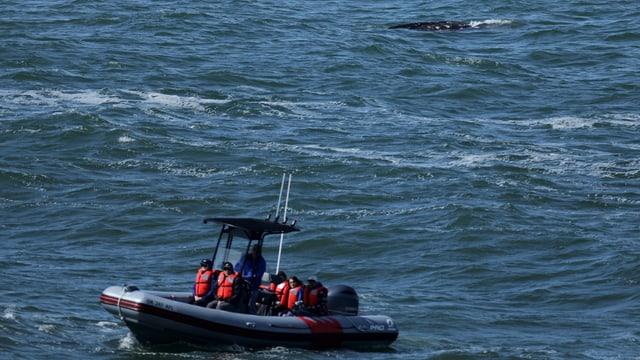 Ein kleines Boot mit Menschen in roten Schwimmwesten auf dem Meer mit einem Wal im Hintergrund.