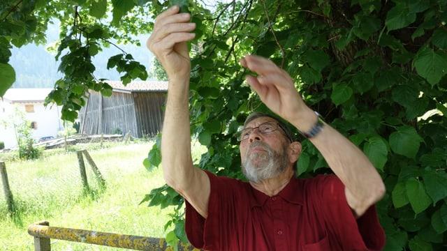 Oskar Hugentobler examinescha mintga di differentas plantas.