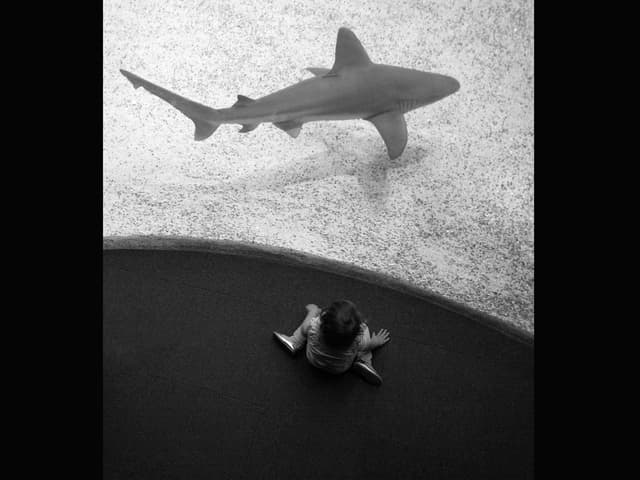 Kind betrachtet Haifisch