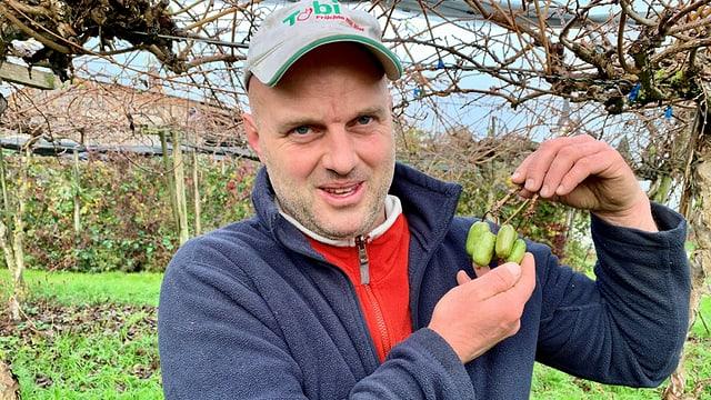 Andreas Eberle mit seinen frisch geernteten Mini-Kiwi auf der Plantage in Altnau.