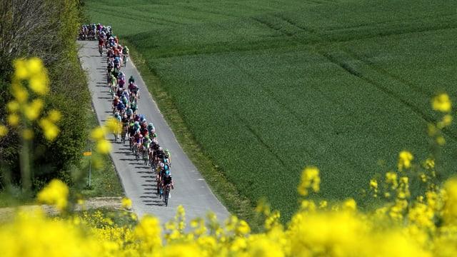 Der Parcours der Tour de Romandie 2014 verspricht spannenden Rad-Rennsport.