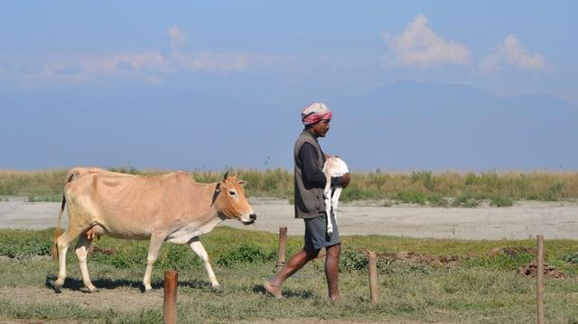 Rinderzüchter Oikay Kutum bringt ein neugeborenes Kalb in Sicherheit.