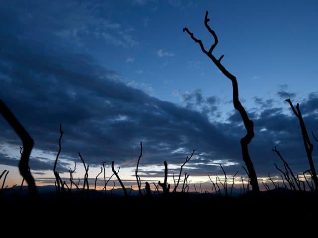 Verbrannte Bäume und Äste unter dem Abendhimmel.