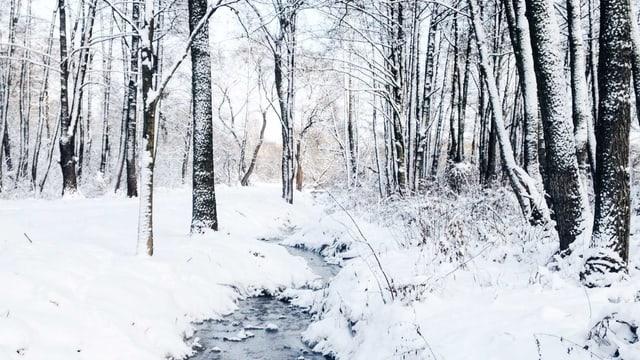 Bächlein in verschneitem Wald.