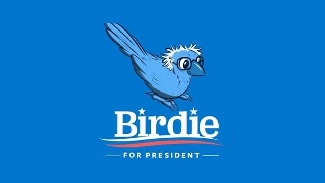 Ein Vögelchen das ein wenig aussieht wie Bernie Sanders.