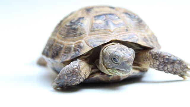 Schildkröten mögen keinen Schnee. Und keine kalten Nächte. Definitiv nicht.