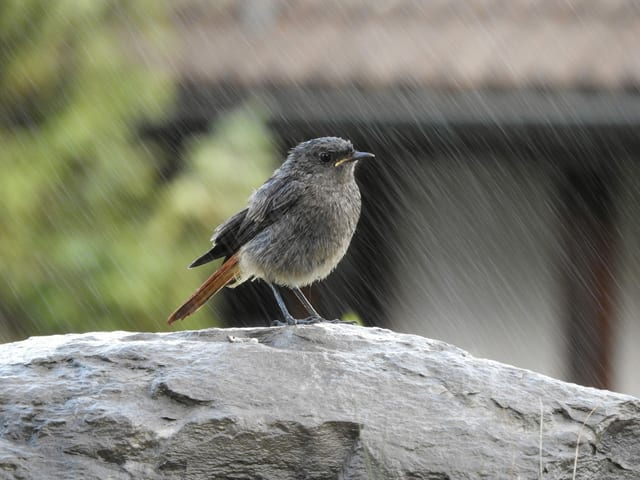 Vogel im Regen