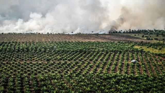 L'Indonesia saja in partenari da commerzi empermettent, manegia il Cussegl federal ed il parlament. Perquai vulan els promover import ed export. Critica datti surtut pervia da l'ieli da palmas.