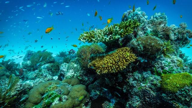 Video «Vamizi – Heimat der Korallen» abspielen