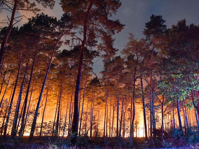 Brennender Wald.
