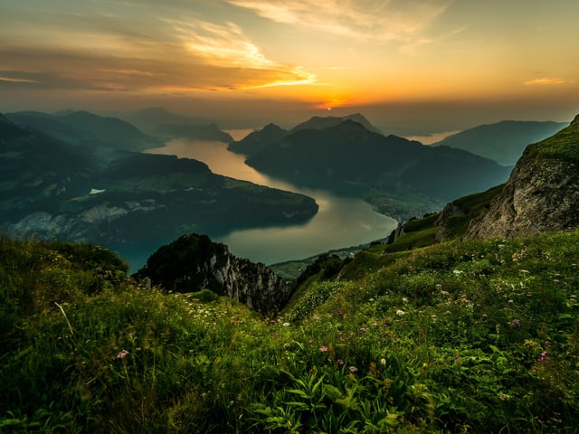 Blick aus den See und die Rütliwiese, im Vordergrund Alpenblumen.