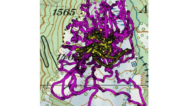 Ina charta che mussa il moviment d'in chaun da protecziun (puncts violets) enturn ina muntanera (puncts mellens).
