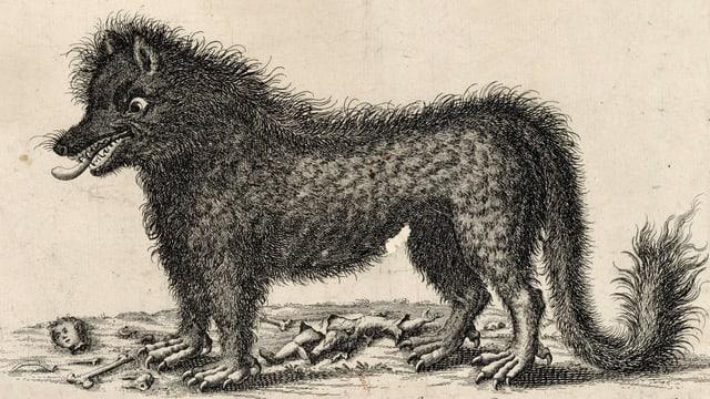 eine historischer Zeichnung eines Wolfs