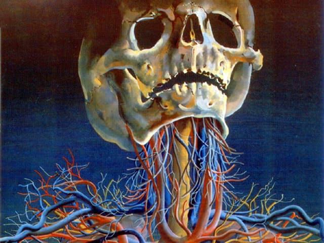 Totenschädel mit vielen Blutbahnen.