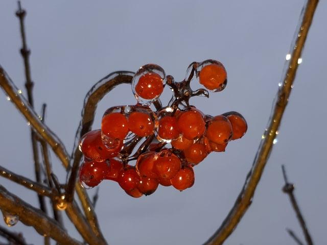 Rote Früchte im Eis.