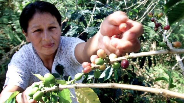 Das System Fairtrade