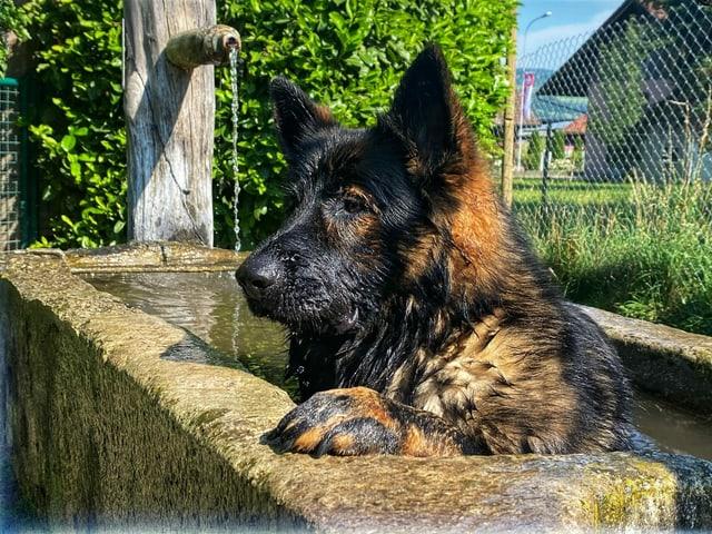Hund badet in einem Brunnen.