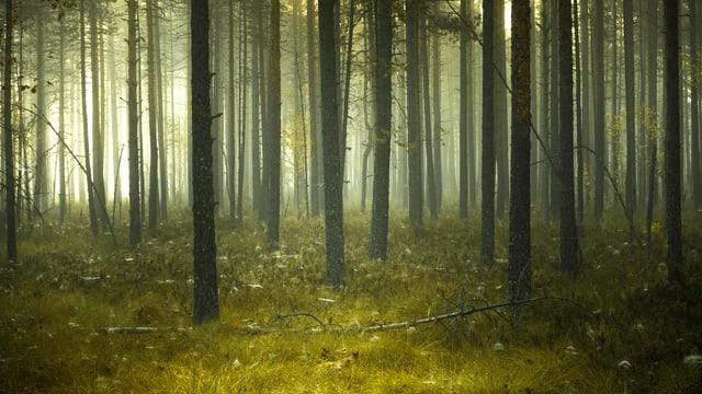 Ein Wald, in dem eine dunkle Stimmung herrscht.