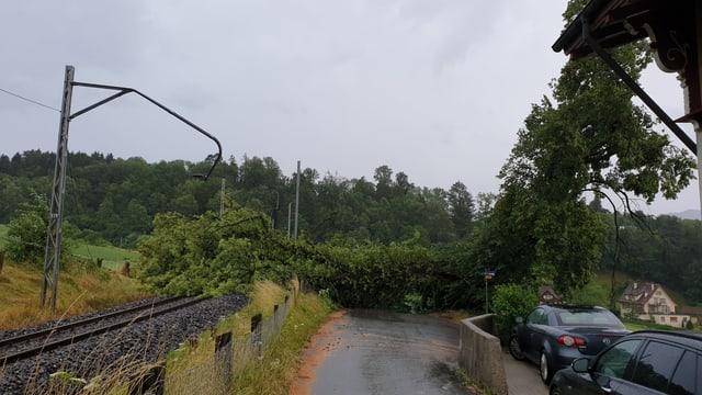 Ein umgefallener Baum versperrt die Durchfart in Stansstad..