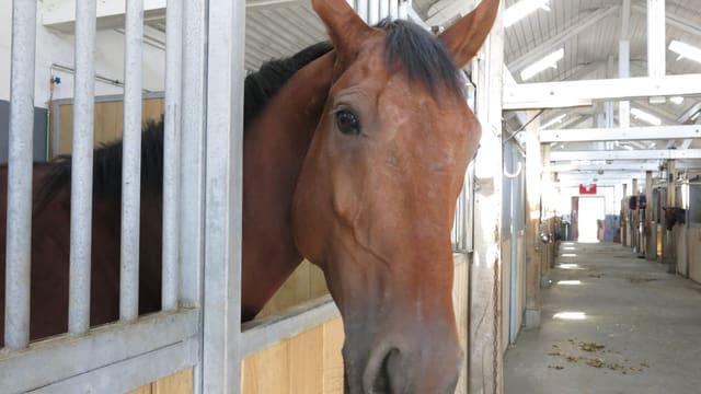 Pferd schaut aus Stall.