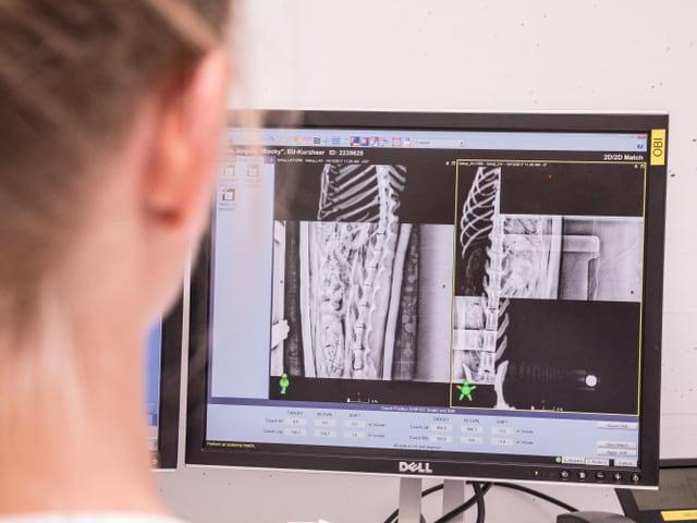 Eine Frau schaut auf einen Monitor. Auf ihm sind CT-Bilder des Katzenkörpers zu sehen.