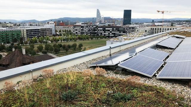 Dachbegrünung in der Stadt Basel
