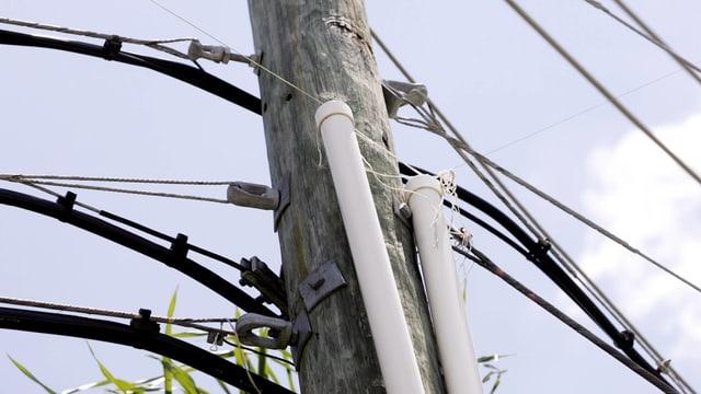 Strompfosten mit einem zusätzlich gespannten dünnen Seil