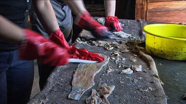 Hände mit roten Handschuhen entfernen Fischfleisch von den Häuten