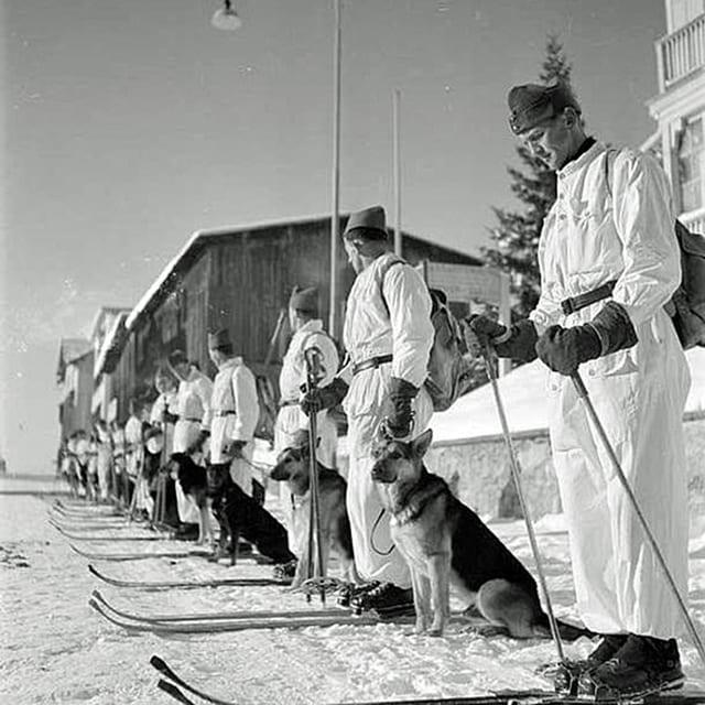 Eine Reihe von Soldaten auf Skiern im Schnee, jeder einen Lawinenhund an seiner Seite.