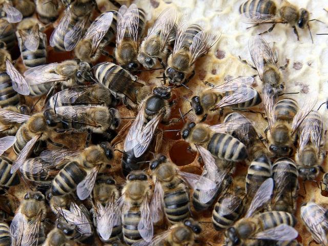 Die Innenansicht eines Bienenstocks.
