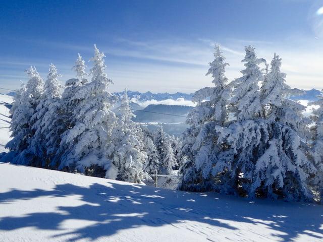 Verschneite Tannen werfen einen Schatten auf den Neuschnee. Im Hintergrund sieht man eine Bergkette. Am blauen Himmel hat es ein paar Schleierwolken.