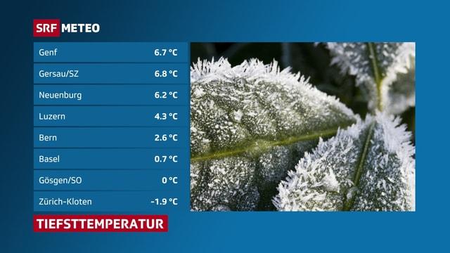 Tabelle mit Tiefsttemperaturen und rechts ein Bild mit einem Blatt mit Reif. Frost gabe es in Zürich-Koten, an Stationen an Seen war es deutlich milder.