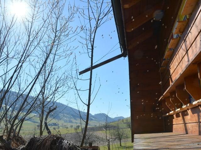 Bienenhaus und fliegende Bienen