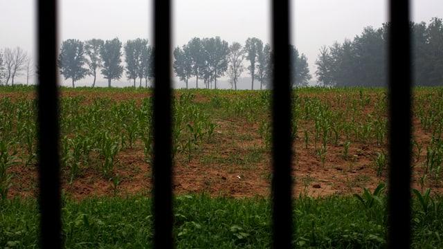 Ein Acker, gesehen durch Gitterstäbe, im Hintergrund eine Baumzeile.