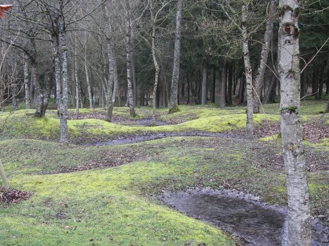 Wiesenlandschaft mit Bäumen. Spuren von Granattrichtern lassen die Landschaft hüglig erscheinen.