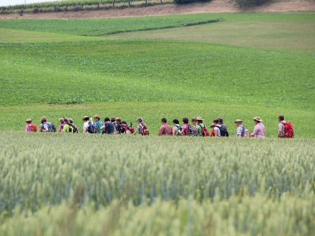 Wanderer durchstreifen im Gänsemarsch ein Kornfeld.