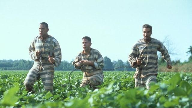 Drei Häftlinge stolpern aneinandergekettet über ein Feld.