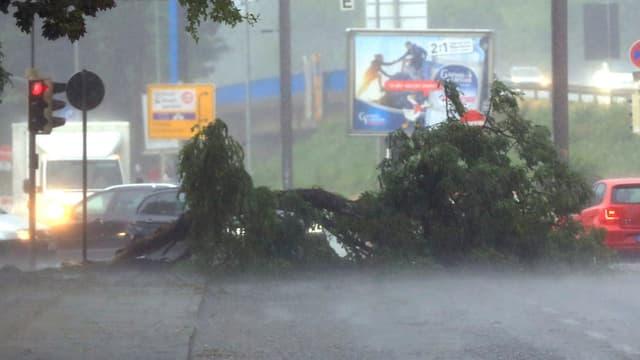 Umgekippte Bäume im Regen auf Strasse.