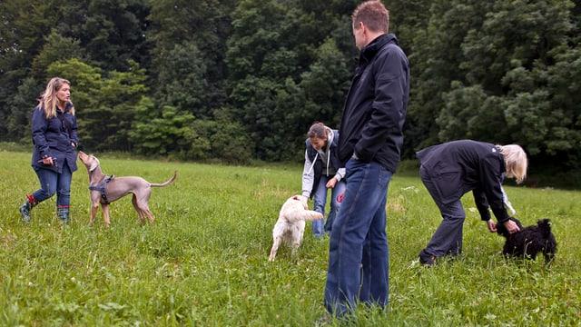 Vier Personen spielen mit Hunden auf Wiese