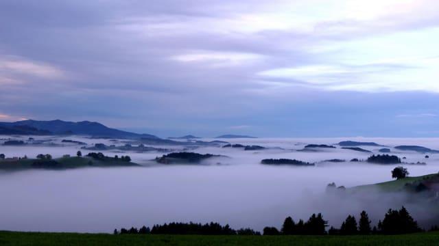 Nebel bei Borisried.
