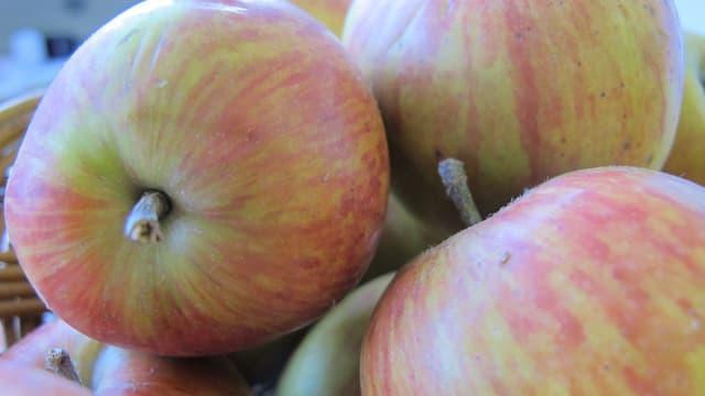 Äpfel der Sorte Alant.