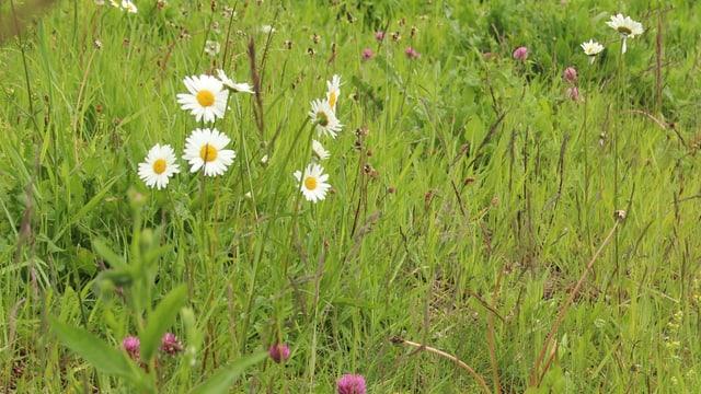 Blumen auf eine Wiese